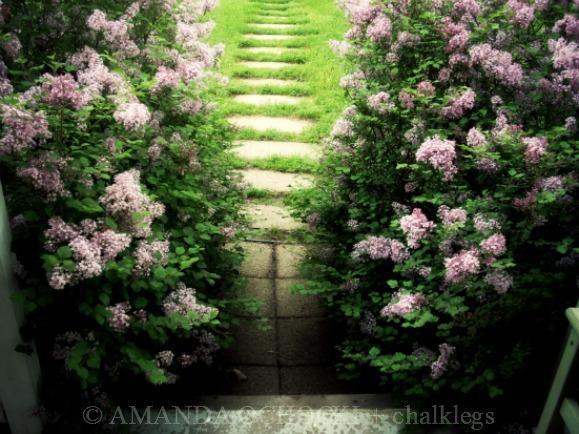 © AMANDA OCHOCKI + chalklegs secret garden