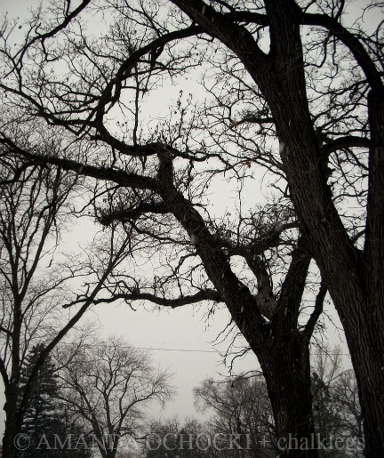 © AMANDA OCHOCKI + chalklegs 100 year oaks
