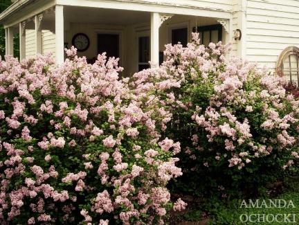 AMANDA OCHOCKI + chalklegs Lilac porch
